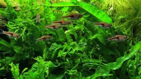 Green Aquarium Background stock footage