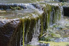 Green aquatic plants and flowing water. This photo was taken on sunny day in a city garden `Planten un Blomen`, Hamburg, Germany stock photography