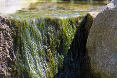 Green aquatic plants and water flowing over stone. Tranquil scene of green aquatic plants and water flowing over stone. This photo was taken on sunny day in a stock image