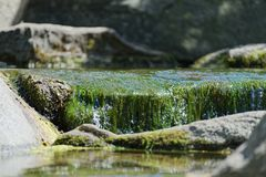 Green aquatic plants and water flowing over stones. Tranquil scene of green aquatic plants and water flowing over stones. This photo was taken on sunny day in a stock photo