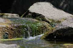 Green aquatic plants and water flowing over stones. Tranquil scene of green aquatic plants and water flowing over stones. This photo was taken on sunny day in a royalty free stock photography
