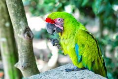 Green ara parrot outdoor Stock Image