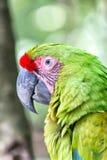 Green ara parrot outdoor Royalty Free Stock Photo