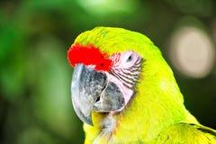 Green ara parrot outdoor Stock Images