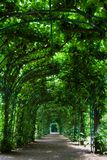 Green arbor Royalty Free Stock Photos