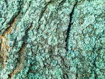 Green arbor bark Stock Photo