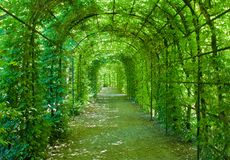 Green arcade. In a european garden Royalty Free Stock Photography