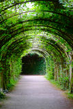 Green Arcade Coridor. A green Coridor arcade in the garden Royalty Free Stock Photography