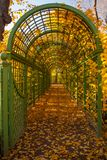 Green arch in autumn park. Royalty Free Stock Image