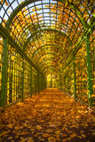Green arch in autumn park. Close up Stock Photography