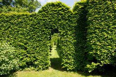 Green arch in garden Stock Photos