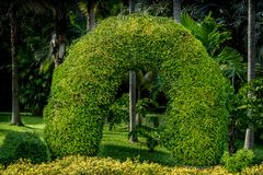 Green arch plants stock photography