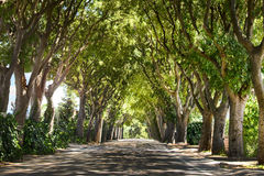 Green arch of trees Royalty Free Stock Images