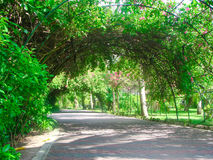 Green arch. Walkway under arch covered with exotic vegetation Stock Images