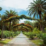 Green arch way in Garcia Sanabria park Santa Cruz de Tenerife, Tenerife, Canary Islands Stock Photos