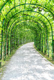 Green archway in a garden Royalty Free Stock Photo