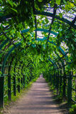 Green archway in the park at summer, plants tunnel pergola with climbing plant Royalty Free Stock Photo