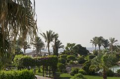 Green area of the hotel. By the sea royalty free stock images