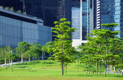 Green area and trees in CBD. Green area and trees in central business district Royalty Free Stock Photography