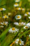 Among The Wildflowers stock photography