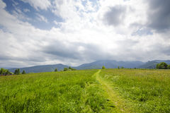 Green areas in Zakopane Stock Photo