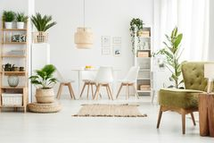 Green armchair in multifunctional room. Lamp on wooden stool and green armchair in multifunctional dining room interior with pouf, plants and brown rug royalty free stock image