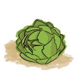 Green Artichoke Stock Photos