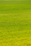 Green artificial grass soccer field for background. Royalty Free Stock Images