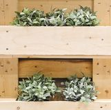 Green Artificial Plants on A Wooden Wall Royalty Free Stock Images