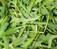 Green arugula Royalty Free Stock Photo