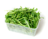 Green arugula Royalty Free Stock Photo