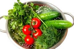 Green arugula Stock Photos