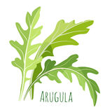Green arugula leaves with colourful inscription under it isolated Stock Image