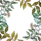 Green ash leaves. Leaf plant botanical garden floral foliage. Frame border ornament square. Aquarelle leaf for background, texture, wrapper pattern, frame or vector illustration