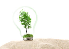 Green ash tree in lamp on sand Royalty Free Stock Photo