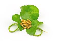 Green Asiatic Pennywort (Centella asiatica ) and yellow pill cap Stock Photos