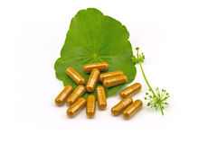 Green Asiatic Pennywort (Centella asiatica ) and yellow pill cap Royalty Free Stock Image