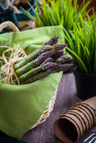 Green asparagus with garden tools Stock Images