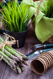 Green asparagus with garden tools Stock Photography
