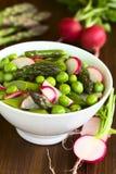 Green Asparagus Radish Pea Salad Stock Photos