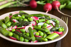 Green Asparagus Radish Pea Salad Royalty Free Stock Photography