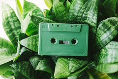 Green audio cassette. Among the leaves royalty free stock photo