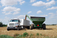 Green Auger unload Wheat into Semi. Color image of green auger unloading wheat into white semi truck Stock Photography