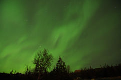 Green Aurora. Lights up the night sky over trees Stock Photo