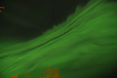 Green Aurora. Lights up the night over trees Royalty Free Stock Images