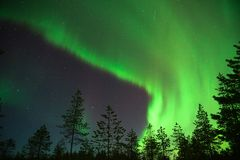 Green aurora borealis in lapland, Finland. Green aurora borealis with forest in foregroud in lapland, Finland royalty free stock image