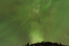Northern Lights Over  Trees. Green Aurora lights up the sky and trees Royalty Free Stock Photo