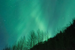 Aurora Over Trees. Green Aurora lights up the sky and trees Stock Photos