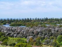 The green Australian south coast Stock Photography