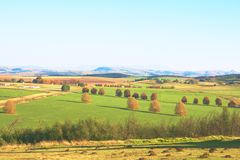 Green autumn agriculture landscape with trees. Green agriculture landscape with autumn trees andmountains in background Stock Photos